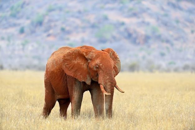 ケニア国立公園の象