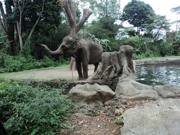 サファリパークの象
