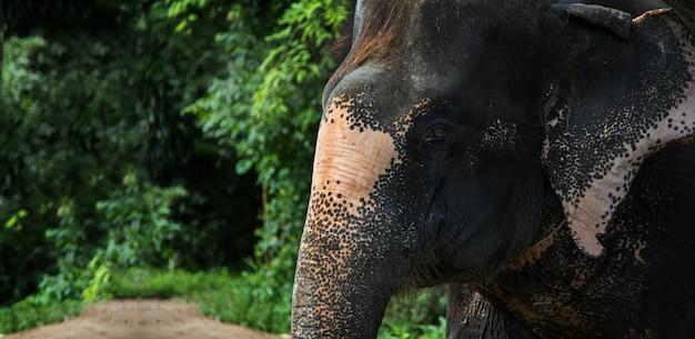 ジャングルの中の象