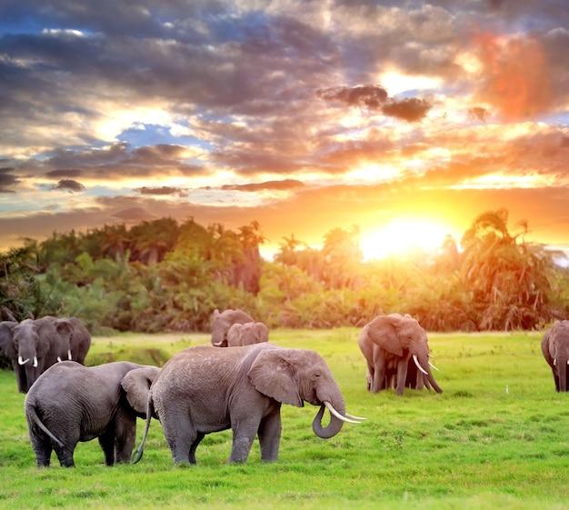 野生の象 - ケニアの国立公園