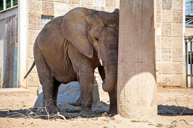 Слон в зоопарке, в германии