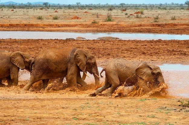 水中の象。ケニア国立公園、アフリカ