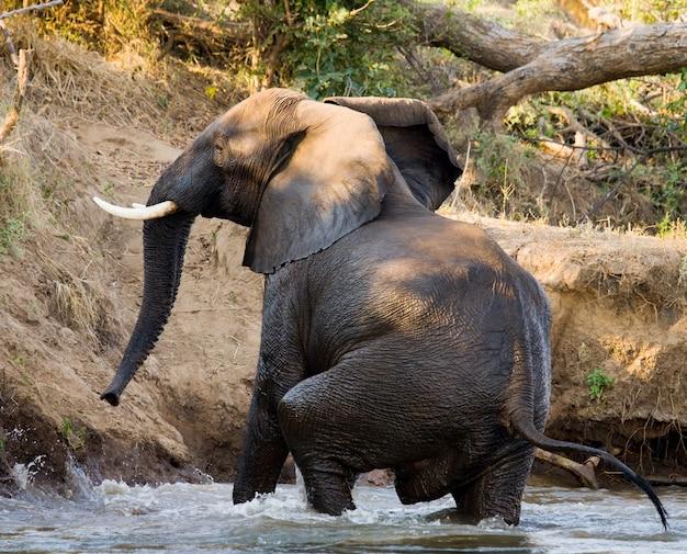 象がザンベジ川で水浴びをしている