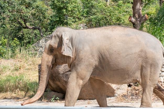 象は歩いている