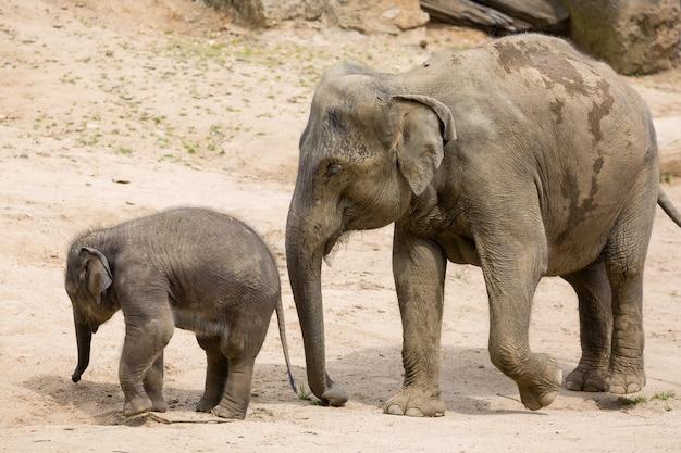 Elephant mother with baby elephant