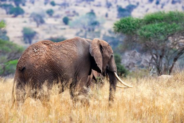 Elephant in national park of kenya, africa
