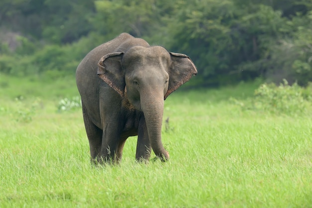 Elephant in the nature