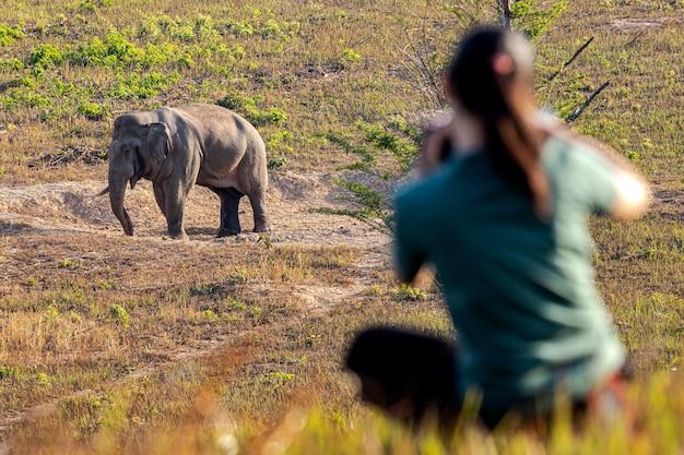 Слон в движении на зеленом лугу в дикой природе