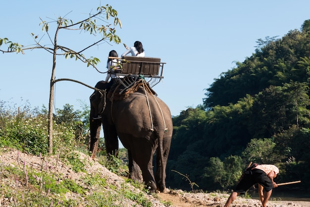 Elephant riding across the river for tourists in nort of thailand