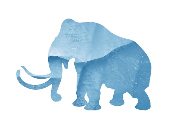 Elephant silhouette with blue ice texture isolated on white background