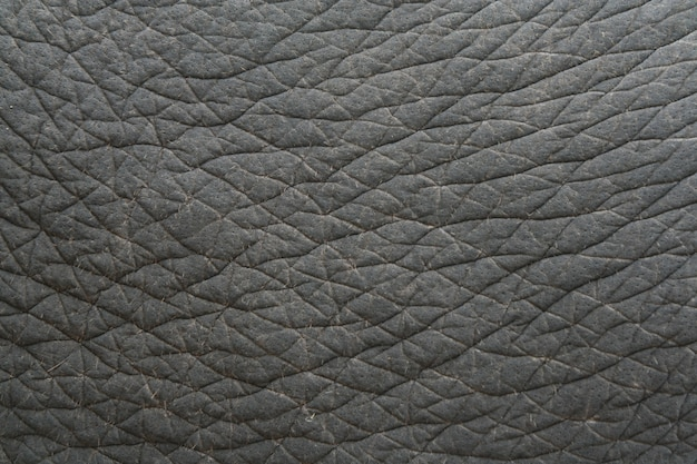 Elephant skin texture, thailand