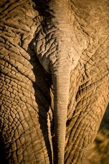 象の尾のクローズアップ