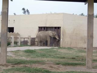 Elephant, travel
