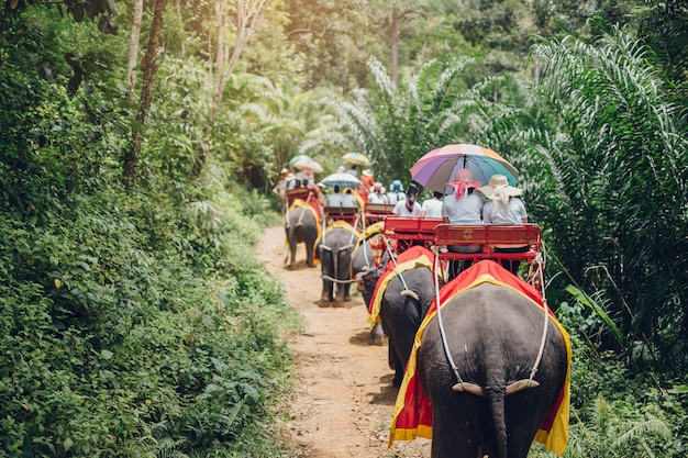 Elephant trekking through jungle in krabi thailand