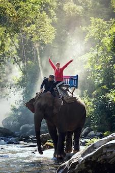 Elephant trekking through jungle in northern laos