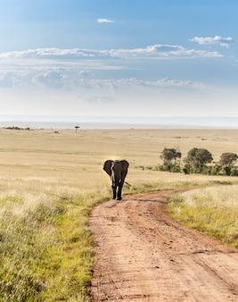 사바나에서 걷는 코끼리