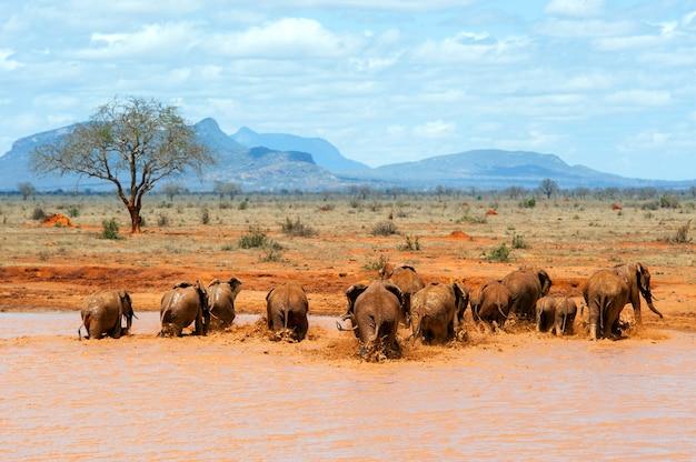 Elephant in water. national park of kenya, africa