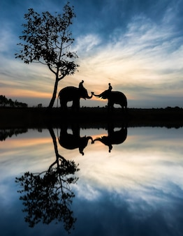 Elephant and water reflection