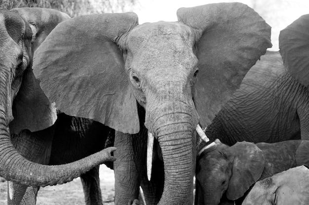 Elephant wildlife in kenya