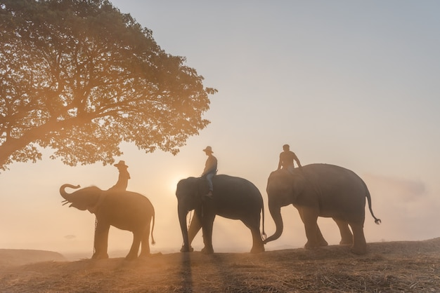 Elephant with mahout in elephant village thailand