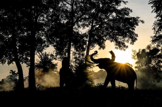 Слоны стоят на рисовых полях утром