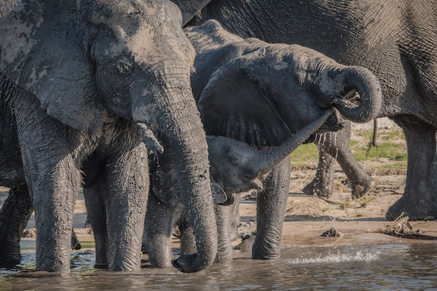 昼間の湖の近くの水を飲む象