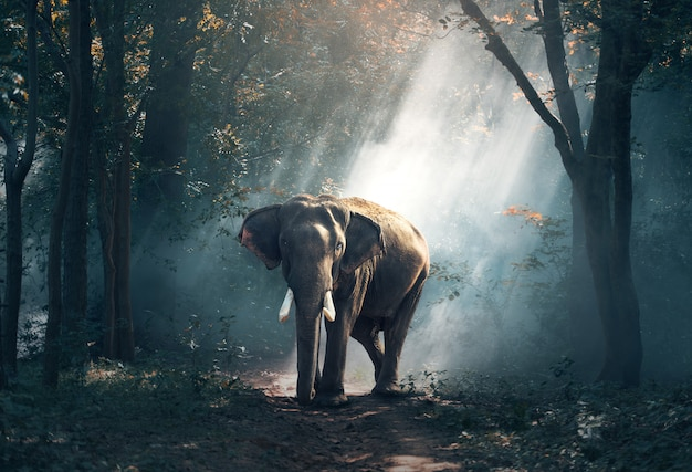 Elephants in the forest
