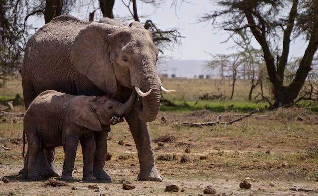 Слоны в национальном парке амбосели - кения