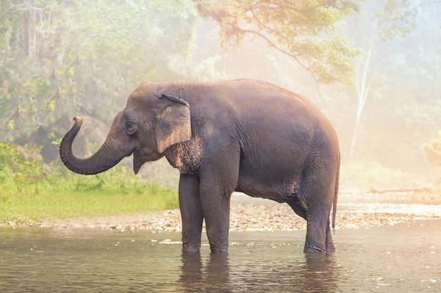 Слоны на реке природы в глубоководных лесах таиланда, азии.