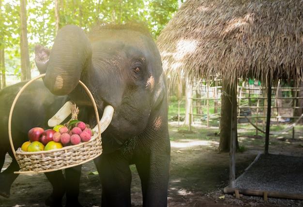 Elephants pick up fruits basket.
