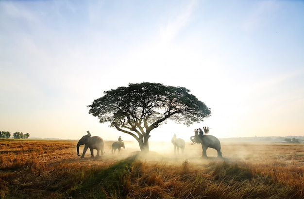 Elephants standing by tree against sunrise in the field