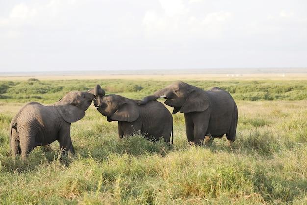 Слоны, стоящие рядом друг с другом на зеленом поле в кении, африка