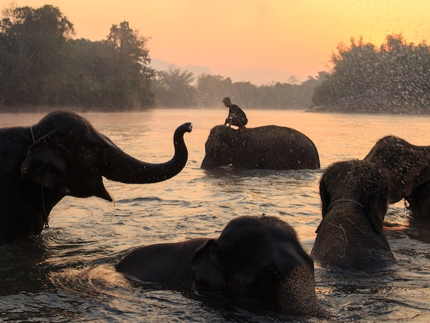 Elephants take a bath in kwae-noi river. kanchanaburi, thailand