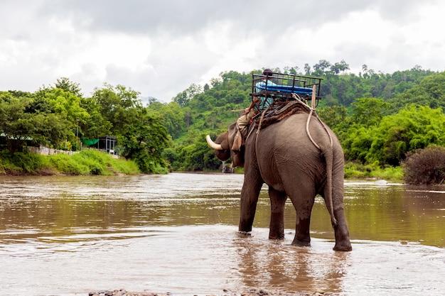 Слоны принимают ванну с погонщиками в слоновьем лагере с мягким фокусом и чрезмерным освещением на заднем плане.