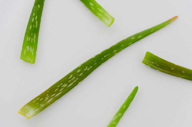 Elevated view of aloe vera leaves on white background