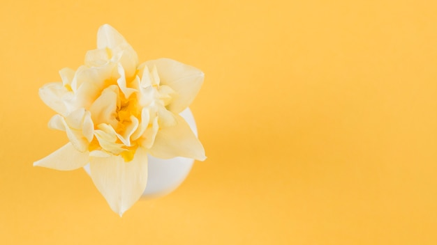 An elevated view of beautiful flower on yellow background