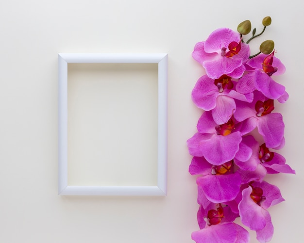 Elevated view of blank photo frame with pink orchid flowers above white backdrop