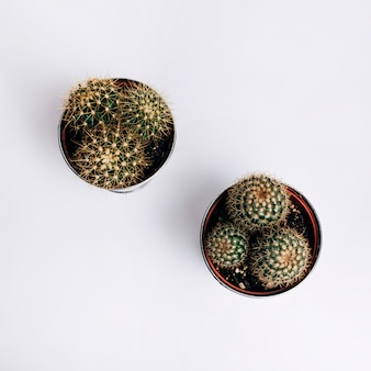 An elevated view of cactus pot plants on white background