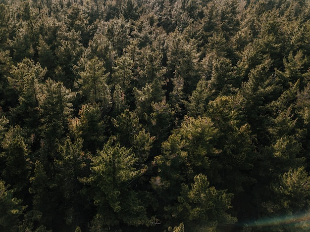 Elevated view of coniferous forest