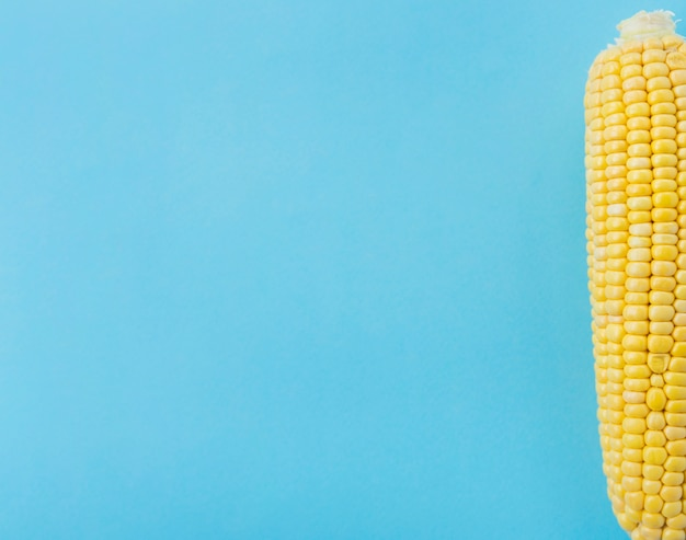 Elevated view of corn cob on blue surface