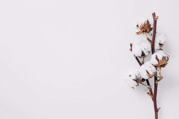 Elevated view of cotton twig on white backdrop