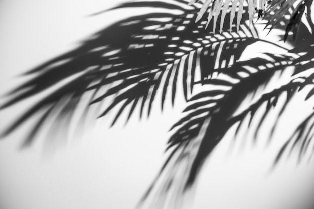 An elevated view of dark palm leaves shadow on white backdrop