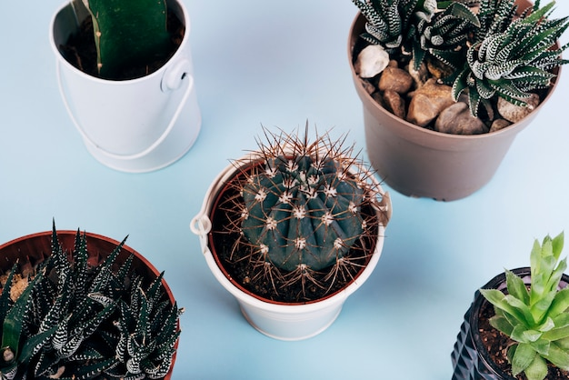 Elevated view of different types of cactus plants in pot over blue background