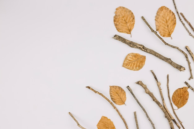 An elevated view of dry leaves and twigs isolated on white background with copy space for text