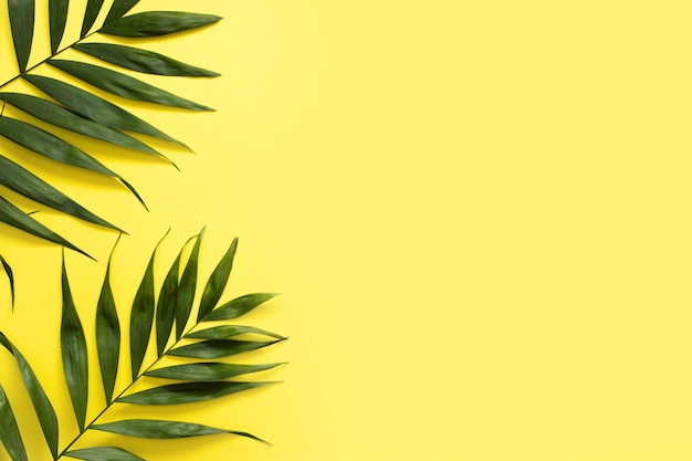 Elevated view of fresh palm leaves on yellow background