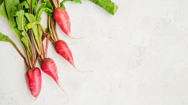 An elevated view of fresh red radish on marble white background