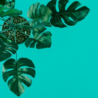An elevated view of green artificial monstera leaves on colored background