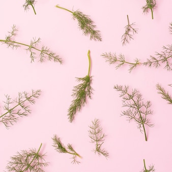 Elevated view of green fennel twigs over pink surface