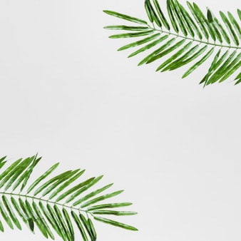 An elevated view of green leaves isolated on white backdrop
