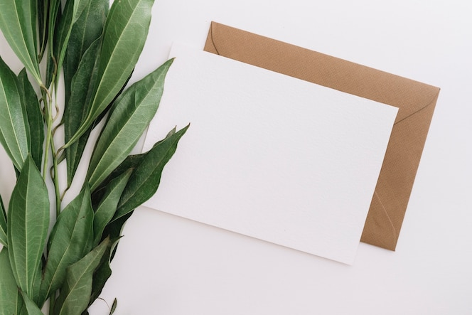 An elevated view of green leaves with two envelopes on white backdrop
